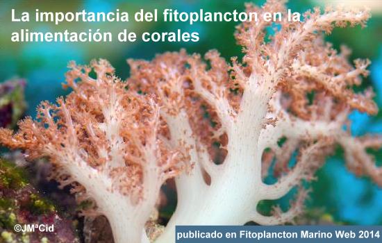 La importancia del fitoplancton en la alimentación de los corales