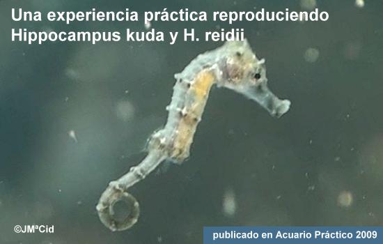 Una experiencia práctica reproduciendo Hippocampus kuda e H. reidii