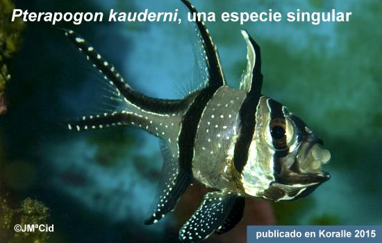 Pterapogon kauderni, una especie singular