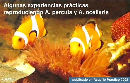 Algunas experiencias prácticas reproduciendo A. Percula y A. Ocellaris