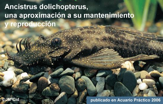 Ancistrus dolichopterus, una aproximación a su mantenimiento y reproducción