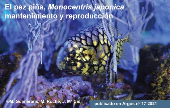 El pez piña Monocentris japonica